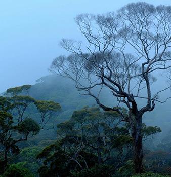 Sinharaja-Forest-Reserve_1