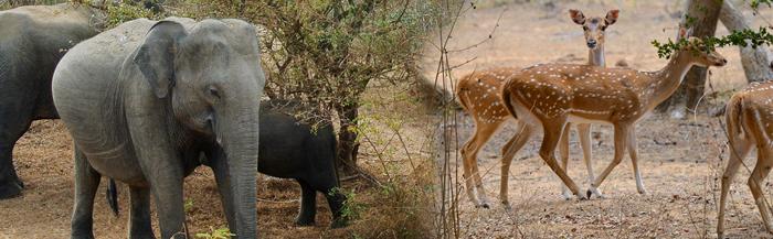 sri-lanka-wildlife-tours